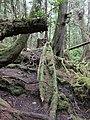 Abandoned canoe (27498778386).jpg
