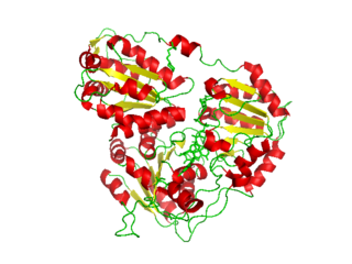 Acetolactate synthase