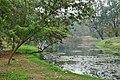 Acharya Jagadish Chandra Bose Indian Botanic Garden - Howrah 2011-02-20 1651.JPG