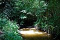 Across the Arun at the north of Nuthurst, West Sussex, England 2.jpg