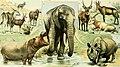 Adolphe Millot mammiferes B2.jpg