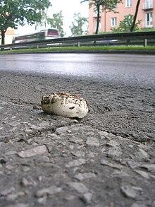 Il fungo dell'asfalto