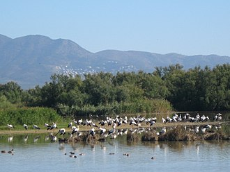Natural park (Spain) - Storks in Aiguamolls de l'Empordà.