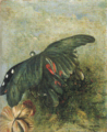 Aimitsu-1942-Butterfly.png