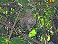 Albino Squirrel.jpg