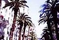 Alger, la blanche 4.jpg