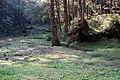 Alishan 阿里山 - panoramio (3).jpg