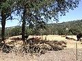Amador CIty, California - panoramio.jpg