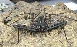 definition of arachnid