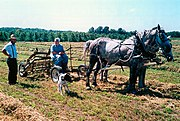 Amish family farming with horses