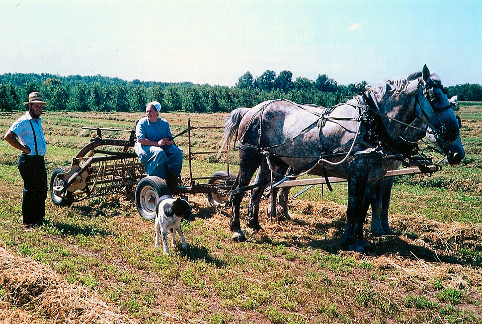 Amish family, Lyndenville, New York