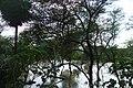 Andiarpalayam LAKE - panoramio (5).jpg