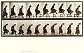 Animal locomotion. Plate 156 (Boston Public Library).jpg