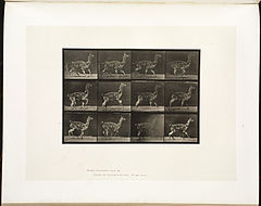 Animal locomotion. Plate 743 (Boston Public Library).jpg