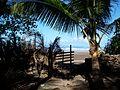 Anjarle beach in Konkan near Dapoli , Maharashtra,India.jpg