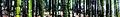 Anji bamboo banner.jpg