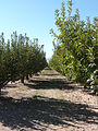 Apple Annies Orchard.jpg