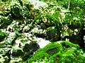 Apriltzi, Bulgaria - panoramio (24).jpg