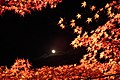Arashiyama Hanatōro, Nison-in 嵐山花灯路・二尊院 紅葉と月 DSCF5361.JPG