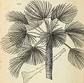 Arboretum et fruticetum britannicum, or - The trees and shrubs of Britain, native and foreign, hardy and half-hardy, pictorially and botanically delineated, and scientifically and popularly described (19563537868).jpg