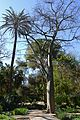 Arbres a la secció de plantes medicinals, jardí botànic de València.JPG