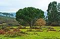 Arredores de Moinhos do Dão - Portugal (4590894905).jpg