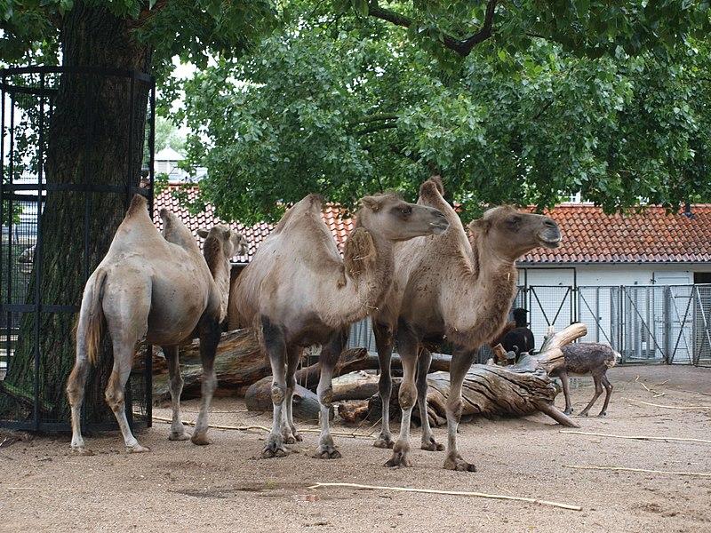 Цены на посещение музеев и зоопарков в Нидерландах значительно выросли