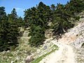 Ascening path, Panachaiko Mountains, Greece.jpg
