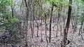 Asurankund Deep Forest - panoramio (4).jpg