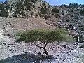 Auhud jabal Madinah - panoramio (2).jpg