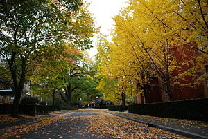 University of Melbourne - Autumn at the university grounds