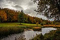 Autumn evening Curragh Chase forest park.jpg