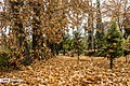 Autumn in Eram Garden 2019-12-09 07.jpg