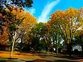 Autumn in Madison - panoramio (3).jpg