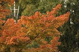 Autumn in St. James Park - London (4047172077)
