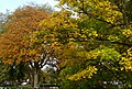Autumn trees on Sutton Green, SUTTON, Surrey, Greater London.jpg