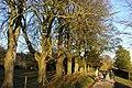 Autumnal Trees - geograph.org.uk - 285388.jpg
