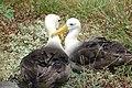 Aves en Las Gápagos.jpg
