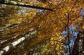 Bäume (27154465494).jpg