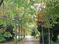 Bad Homburg Schlosspark 0669-dh.jpg