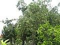 Bahçem - panoramio.jpg