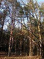 Baltiyskiy rayon, Konigsberg, Kaliningradskaya oblast', Russia - panoramio (50).jpg
