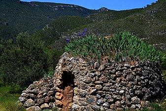 Barraca de Pedra Seca, Torrelles de Foix, Alt Penedès.jpg