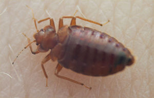Mesa Hospital Allegedly Has Bedbugs | Pest Control Mesa AZ