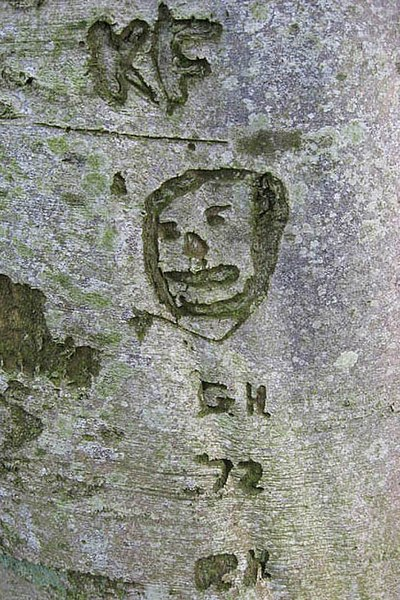 File:Beech tree graffiti - geograph.org.uk - 686131.jpg