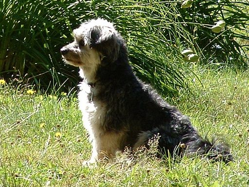 Ben Family Dog 01