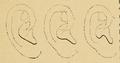 Bertillon - Identification anthropométrique (1893) 061.2.png