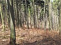 Bielawa, Poland - panoramio (13).jpg
