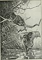 Big game hunting in Africa and other lands; the appearance, habits, traits of character and every detail of wild animal life (1910) (20182076590).jpg