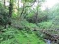 Birch down across brook beside old tramway - June 2012 - panoramio.jpg